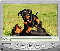 Videos - Deutsche Pinscher